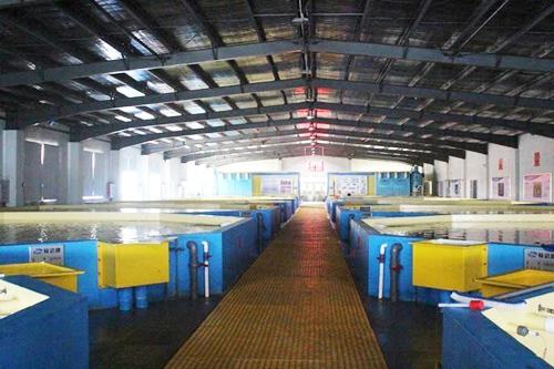 工厂化循环水养殖模式—水产养殖新常态