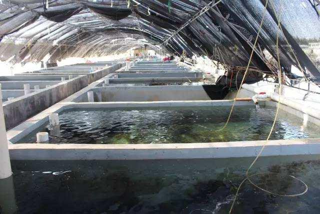 工业化循环水养殖中固体去除技术探讨