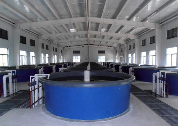 循环水养殖